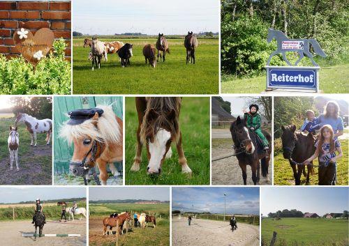 ...ein Besuch auf unserem Reiterhof