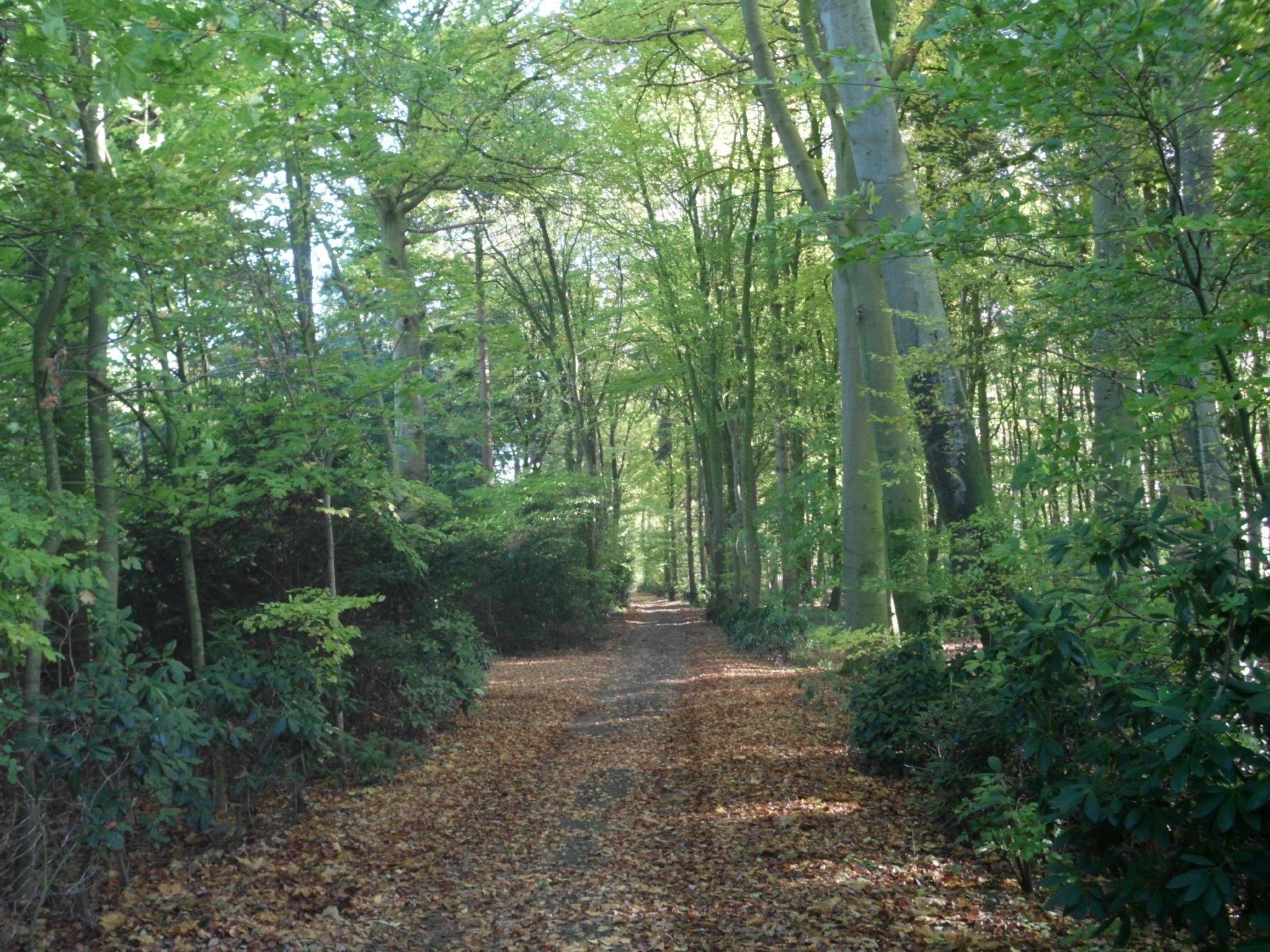 Zusatzbild Nr. 13 von Ferienhaus Heuerhaus Gut Einhaus
