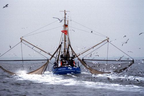 Typisch Nordsee Krabbenkutter