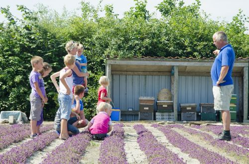 Prächtigen Blumenfeldern.