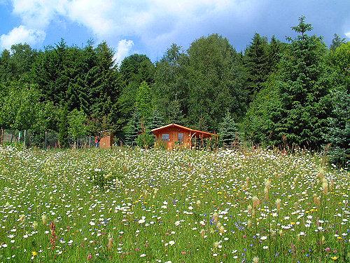 großer Garten mit Gartenhütte
