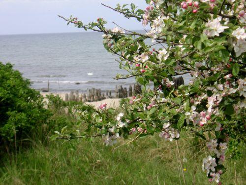 D�ne, Strand und Mee(h)r