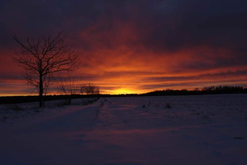 Sonnenuntergang in Dankerode im Winter