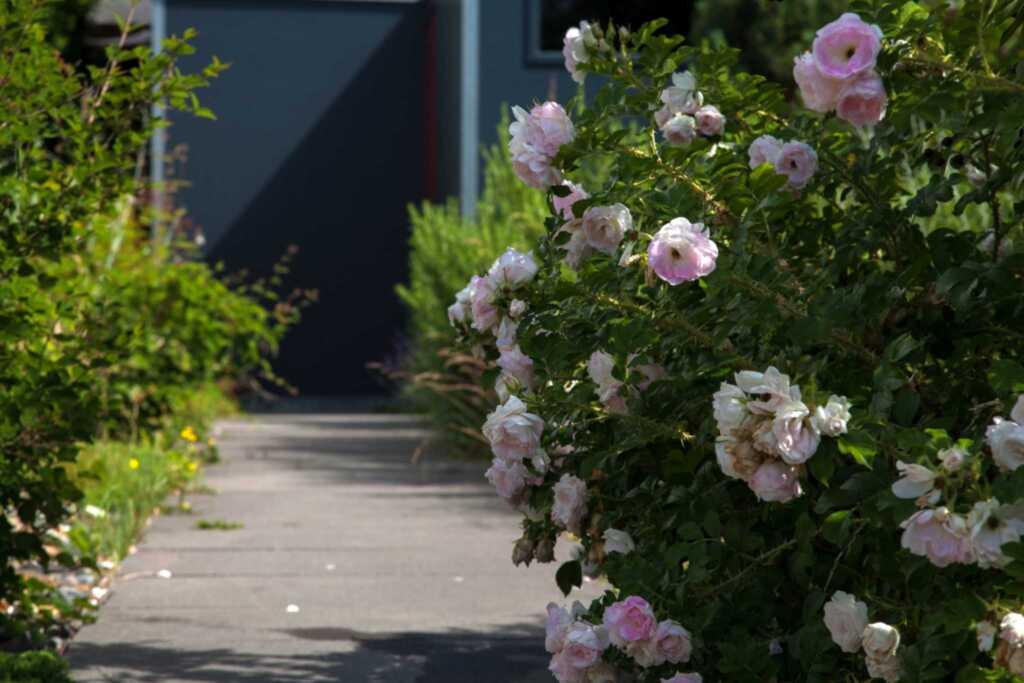 Ferienhaus Sonnensteg 23 SE, Ferienwohnung 1