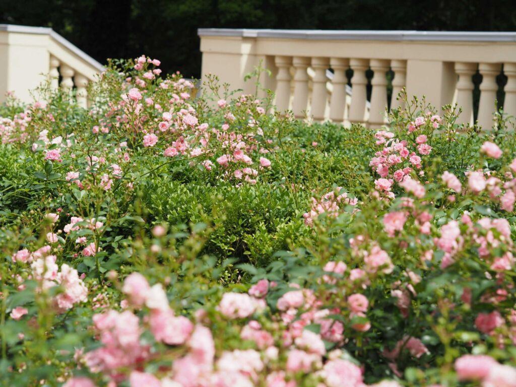 Residenz Bleichröder Whg. Cäcilie Apartmentvermi