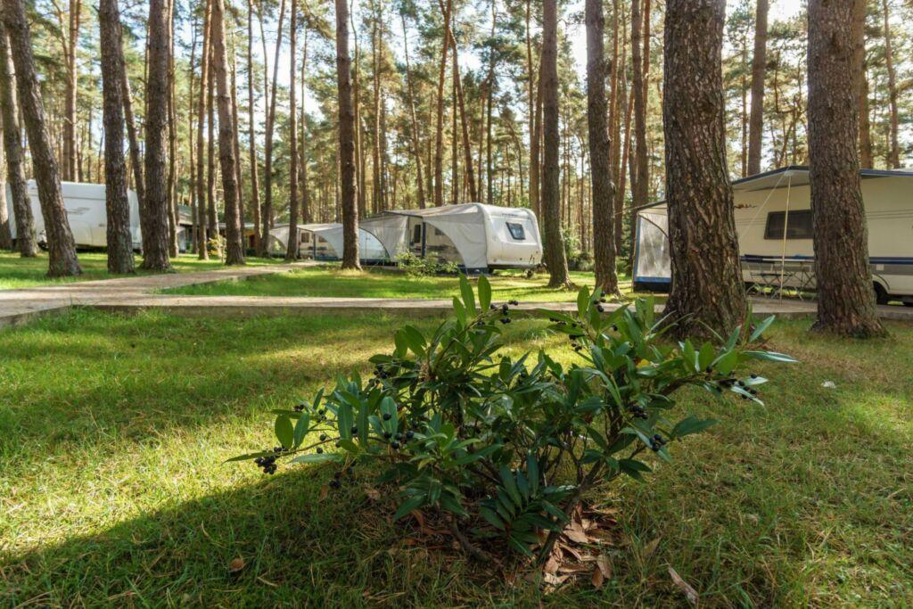 Urlaub im Wohnwagen - mitten im Wald, Wohnwagen 19