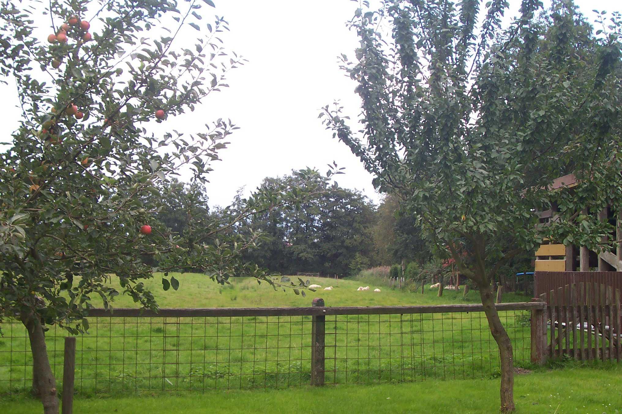 Angrenzende Weide mit unseren Schafen