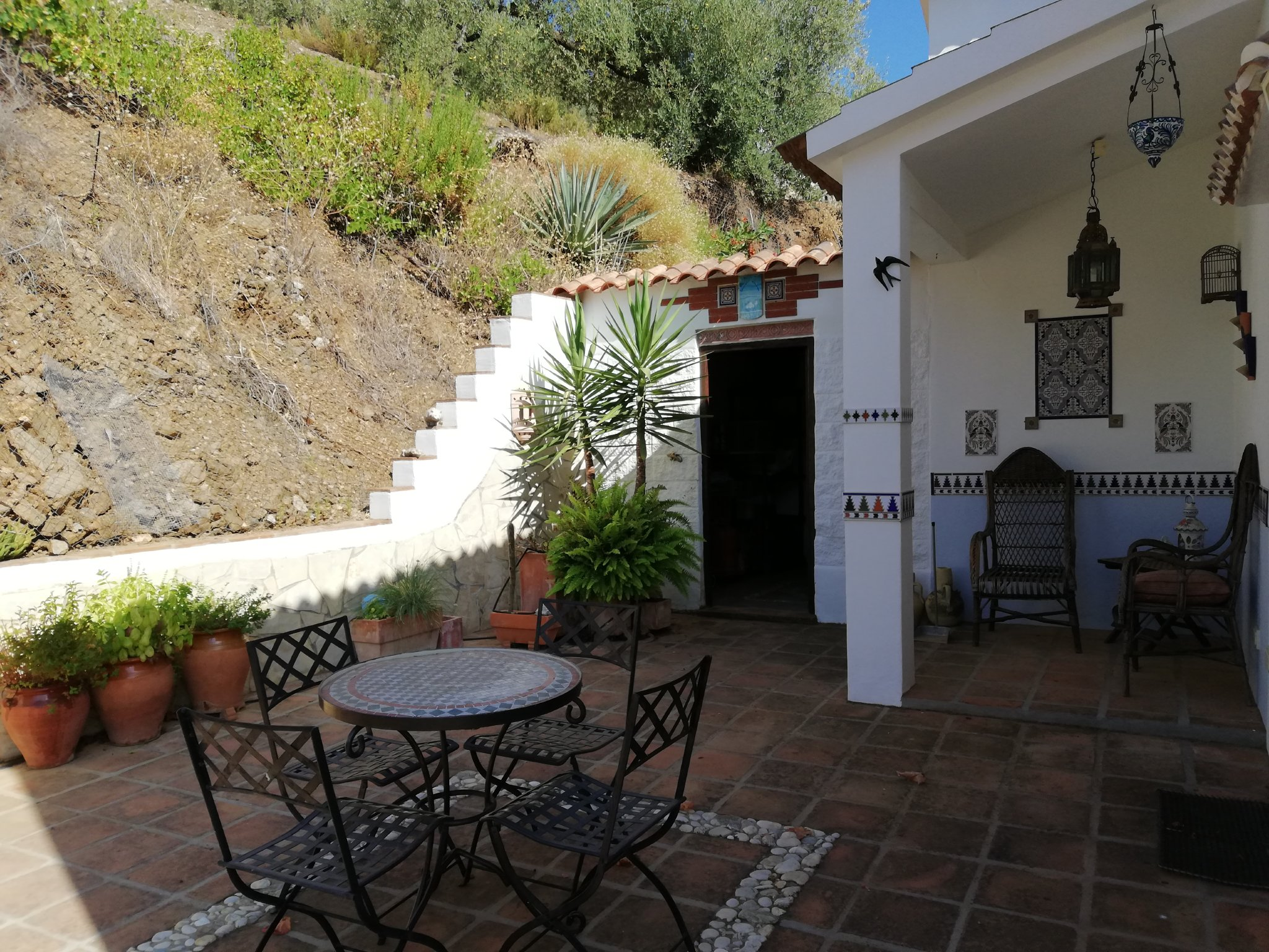 Palmengarten/Terrasse neben dem Pool