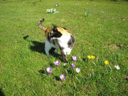 Katze im Frühling