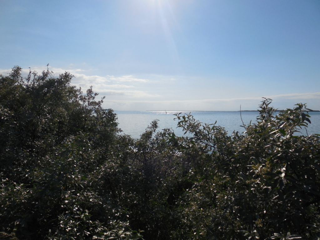 Bungalow am Strand (50m) - Pepelow - Ostsee - bis