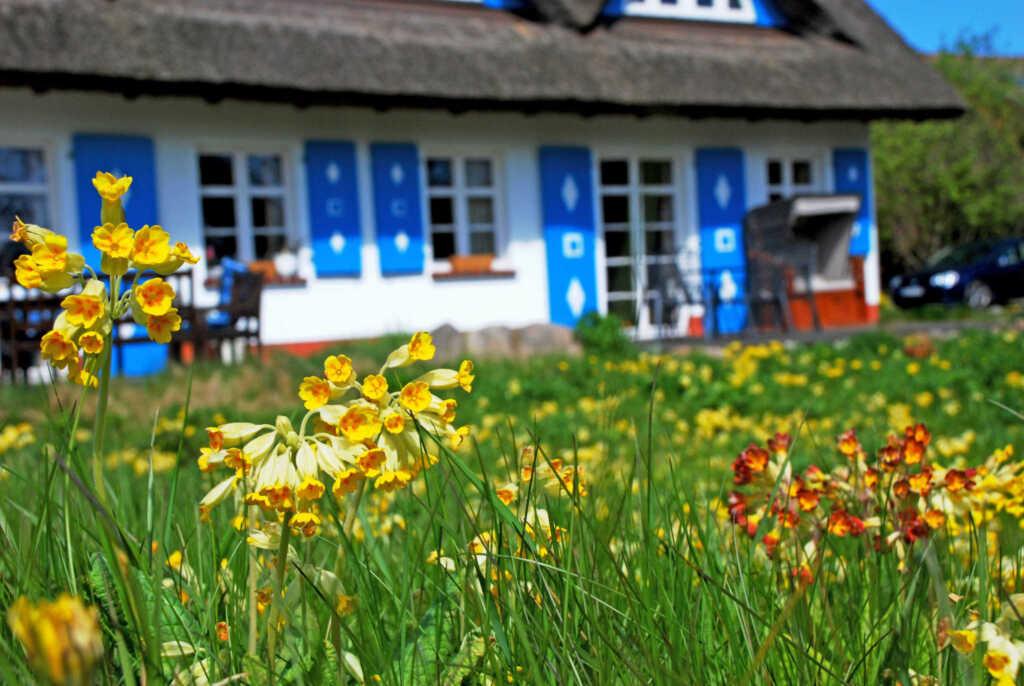 Ferienappartement unterm Reetdach Haus Sonnenwinke