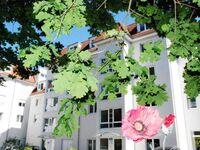 Komfort-Ferienwohnung Düne by Meer-Ferienwohnungen, Komfort-Ferienwohnung Düne, Strandnah, Gute Aust in Binz (Ostseebad) - kleines Detailbild