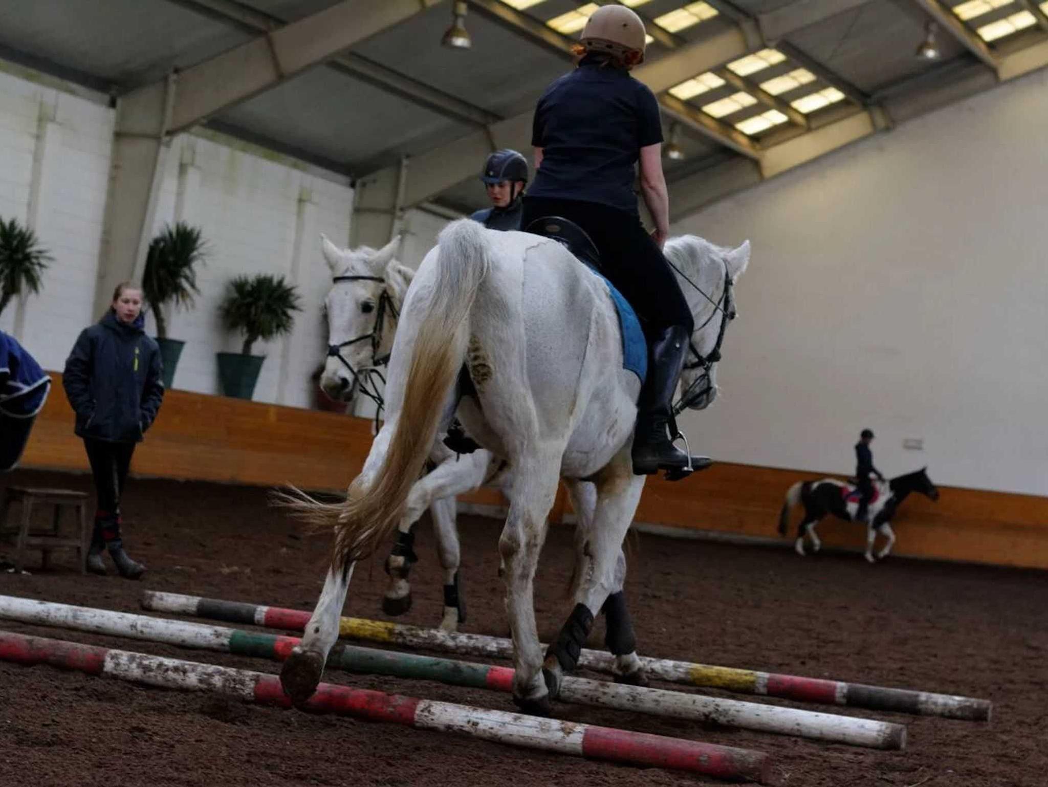 �Reit- und Ferienhof Blohm�, Ferienwohnung im Baue