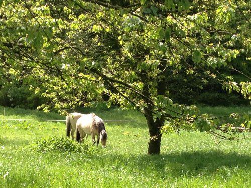 Pferdeweide beim Dornröschenhaus