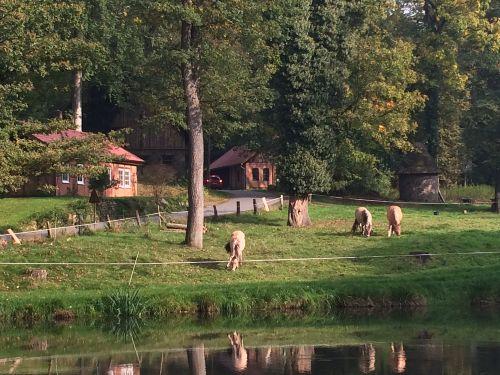unsere Pferde vor dem Dornröschenhaus