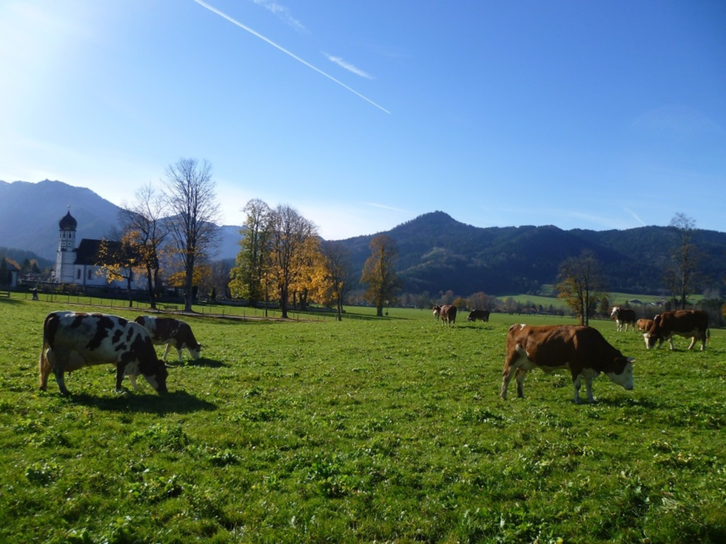 Moarhof Wittmoser - Biohof, Ferienwohnung Himmelsb