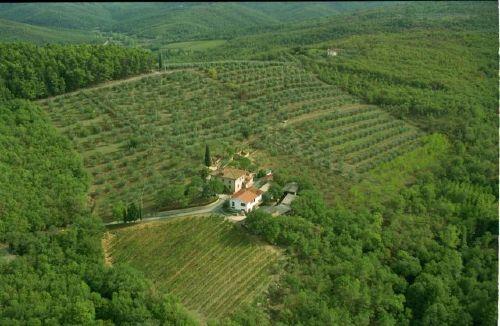 Das Anwesen umgeben v. Wein-und Ölbergen