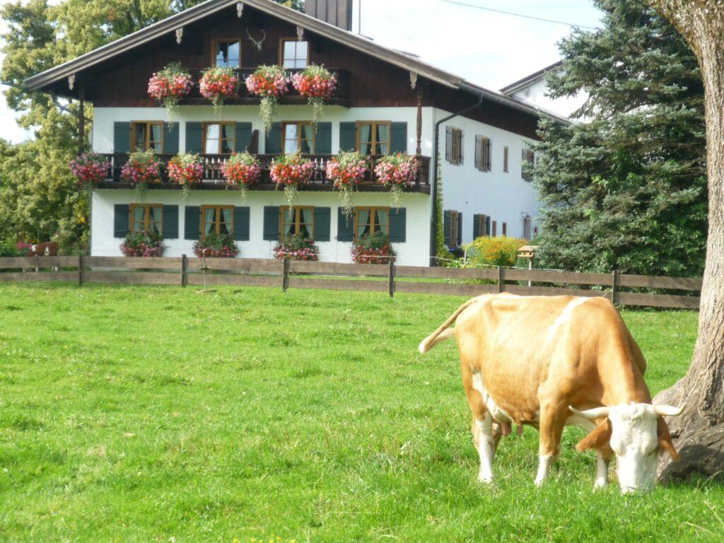 G�stehaus Kordes-Zellermair, Ferienwohnung Buche