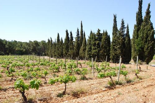 Weinanbau im La Clape