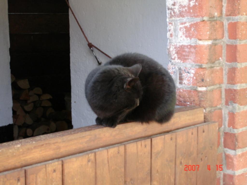 Ferienhof Altona, Katzenkorb