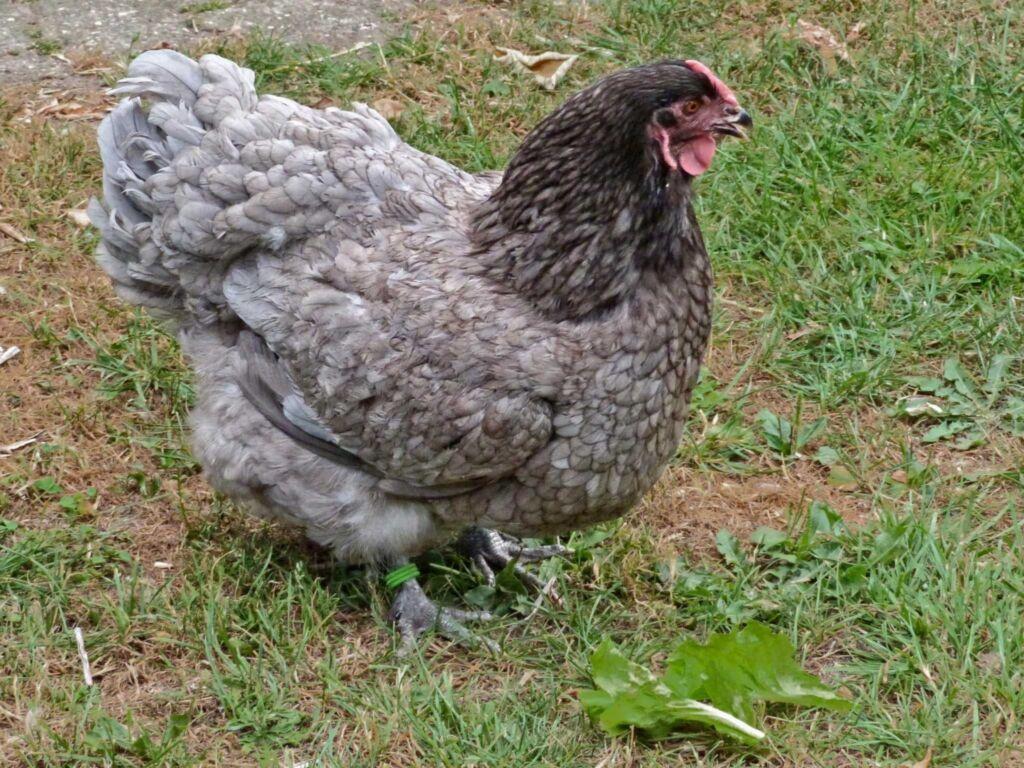 Ulmenhof Melfsen, kleines Haus