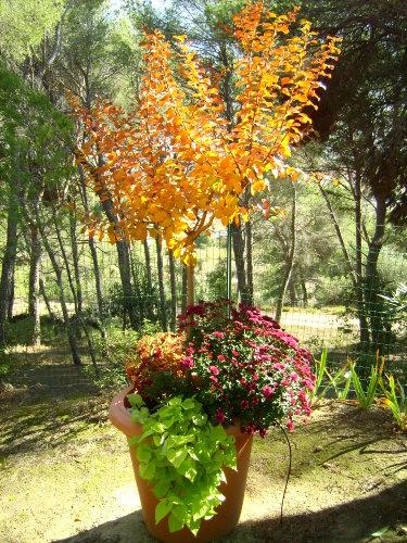 Herbststimmung in Belv�ze