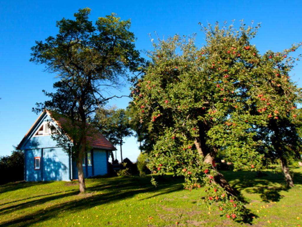 Ferienhaus Kranichblick am Bodden, Ferienhaus Kran