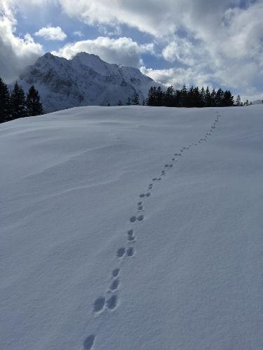 Einsteiger-Skitour am Kranzberg.