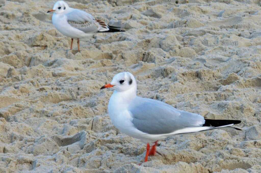 Usedomtourist Koserow App-Haus Grete 2-16, Fewo 16