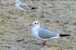 Usedomtourist Koserow App-Haus Grete 2-14, Fewo 14