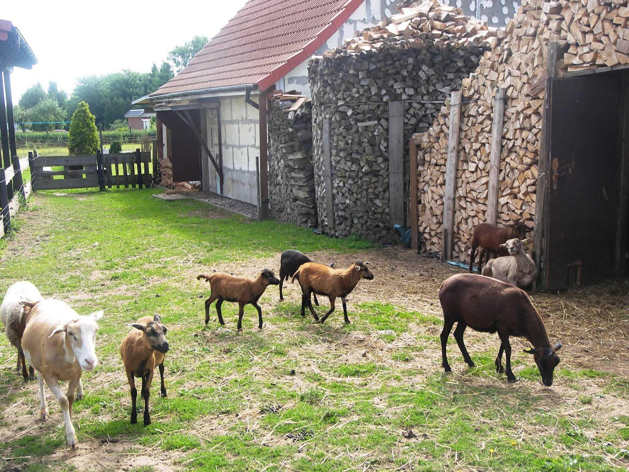 Ferienzimmer Sonja B�hland, Zimmer 02 EG