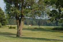 4000 qm Garten - Platz für die Familie