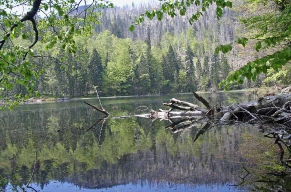 Fewo Rachel - Bayerischer Wald, DG 6P