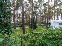 Urlaub im Wohnwagen - mitten im Wald, Wohnwagen 09 (neu) in Lütow - Usedom - kleines Detailbild
