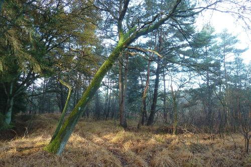 Moor-Randweg Otternhagener Moor