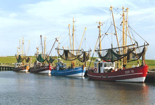 Krabbenkutter im Hafen