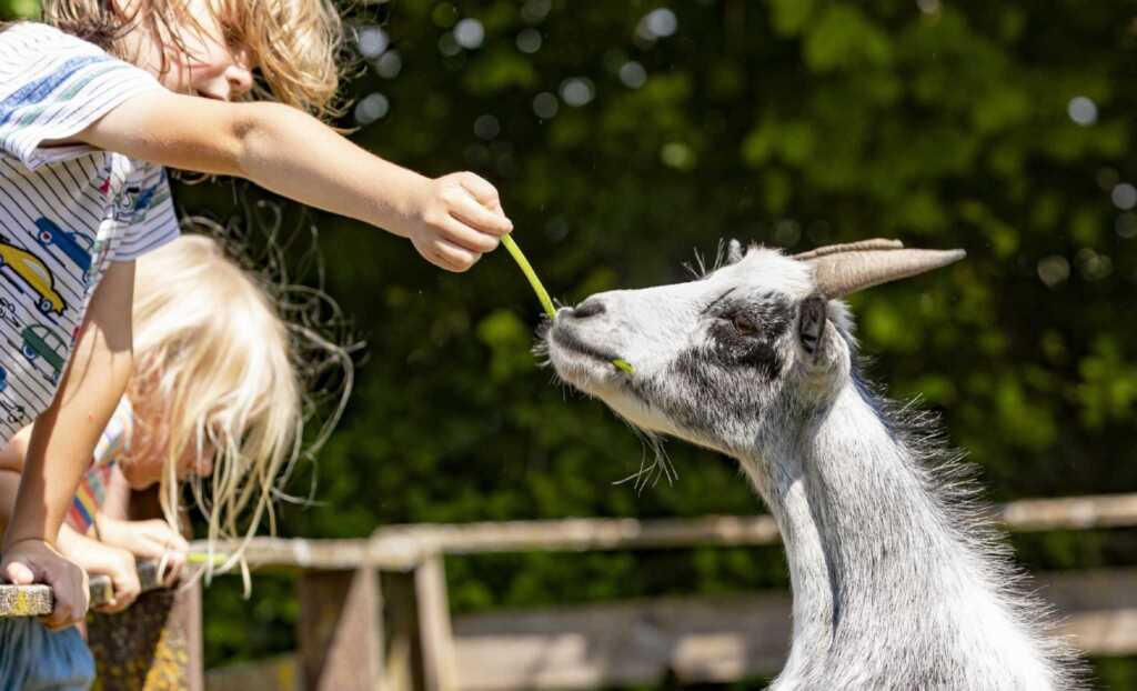 Ferienhof Pfeiffer, Bärenhöhle