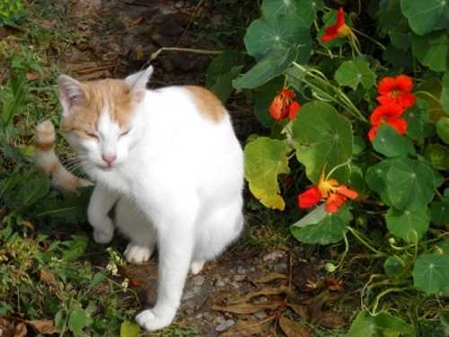 Unsere liebe Katze Mimi