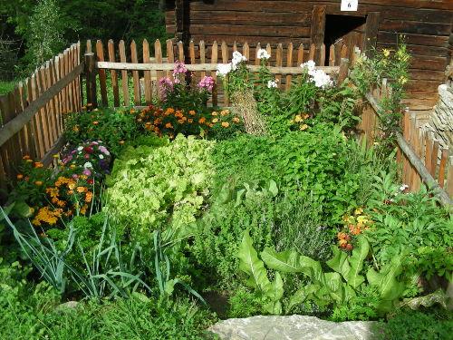Frisches Gemüse im Garten