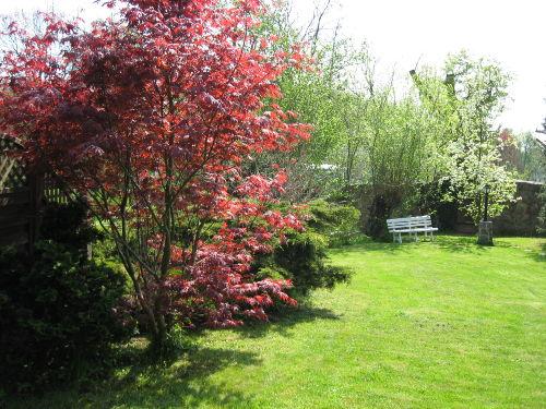 Garten - Blick von Terasse