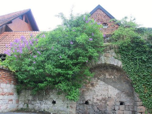 Historische Altstadtmauer in unseren Hof
