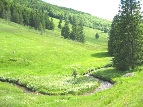 Natur und Ruhe