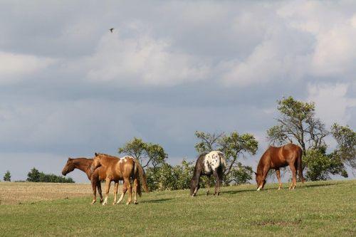 Pferde auf dem weitläufigen Grundstück