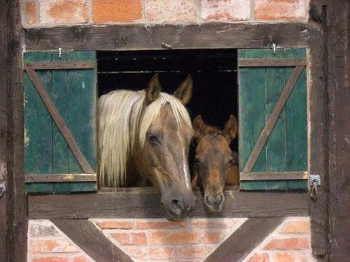 Pferde auf Gut Friedenthal