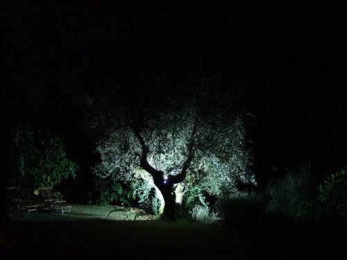 Garten mit altem Olivenbaum bei Nacht