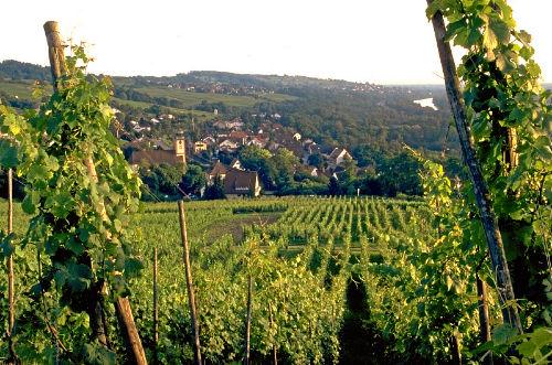 Wandern in den Weinreben