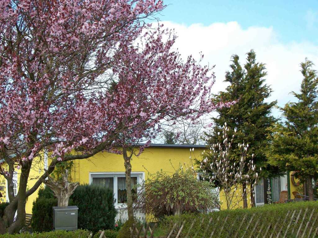 Ferienhaus Sagard RÜG 751, RÜG 751
