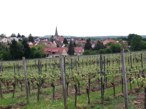 Blick auf Bissersheim