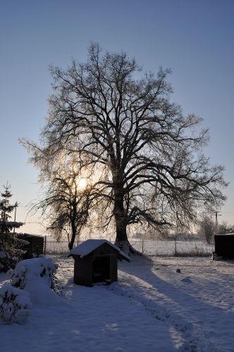 Linden - Winteransicht