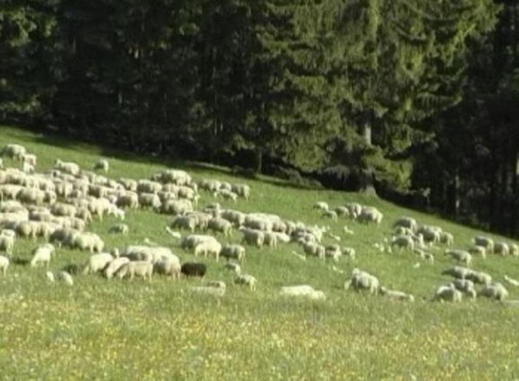 Ferinhaus im Wald bis 19+2 Personen (TW50110), Fer